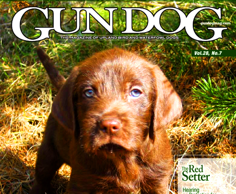 The Cover Of Gun Dog Magazine It Doesnt Get Any Better